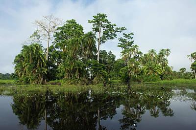 Scenic Lekoli River, Congo Poster by Pete Oxford