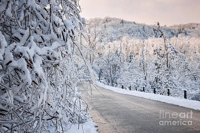 Scenic Road In Winter Forest Poster by Elena Elisseeva