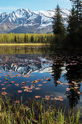 Scenic View Of Lily Pads On A Pond Poster by Doug Lindstrand