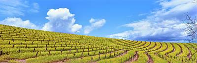 Scenic View Of Vineyard In Springtime Poster