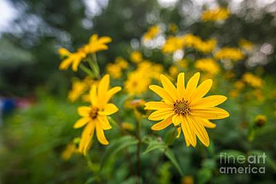 Schlitz Audubon Wild Flower Poster
