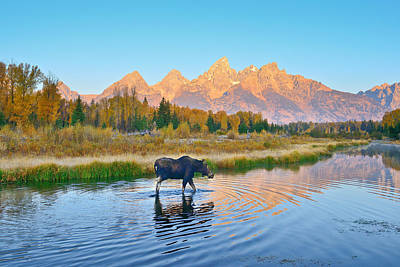 Schwabacher Morning Travels Poster by Greg Norrell