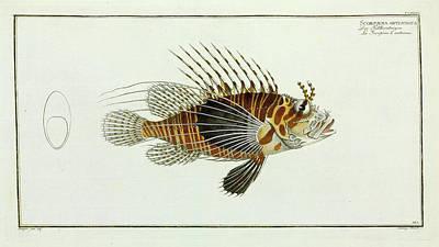 Scorpaena Antennata (pterois Antennata) Poster by Natural History Museum, London