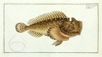Scorpaena Horrida (synanceia Horrida) Poster