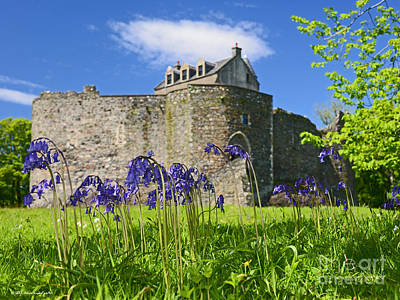 Scots Spring Bluebell Flowers At Scotland Dunstaffnage Castle  Poster