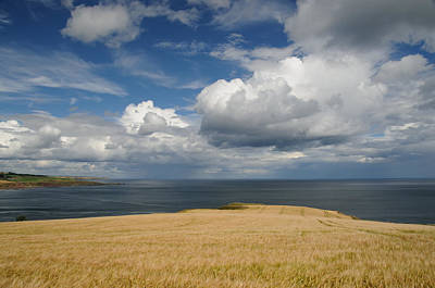 Scottish Coastal Wheatfield Poster by Jeremy Voisey