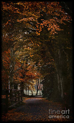 Poster featuring the photograph Scottish Woodland Walk by Liz  Alderdice