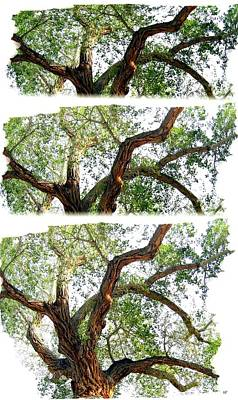 Scotty's Castle Oak Tree Poster