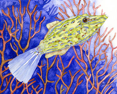 Scrawled Filefish Poster