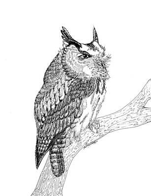 Screech Owl Poster by Lee Halbrook