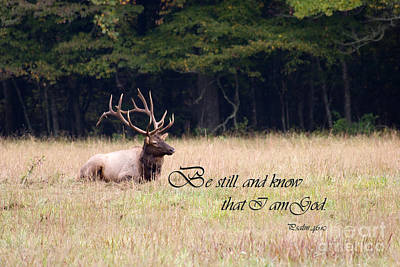 Scripture Photo With Elk Sitting Poster