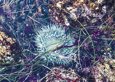 Poster featuring the mixed media Sea Anenome - Terrestrial Flower by Terry Rowe