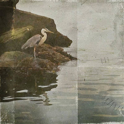 Poster featuring the photograph Sea Bird by Kevin Bergen