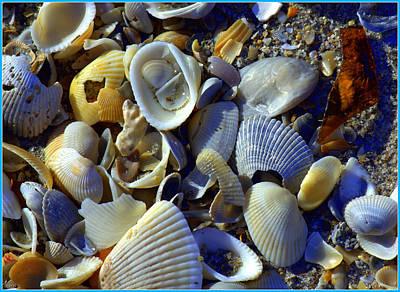 Sea Glass And Shells Poster
