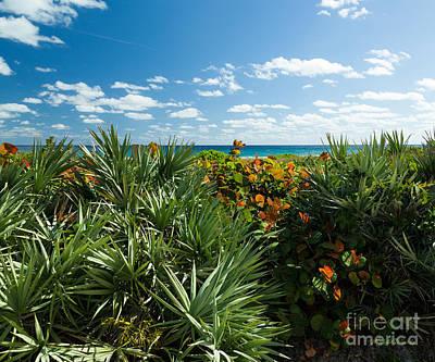 Sea Grapes And Saw Palmetto Poster by Michelle Wiarda