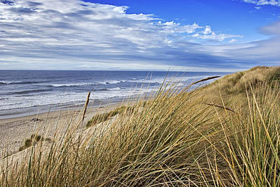 Sea Grass And Sand Dunes Poster