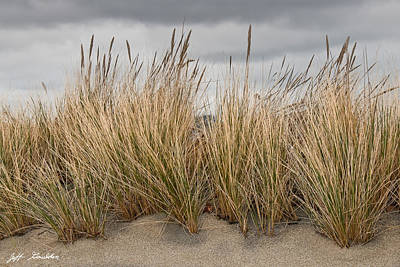 Sea Grass And Sand Poster