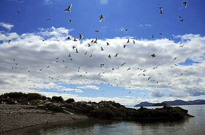 Sea Gulls Flying Above The Shoreline Of Poster