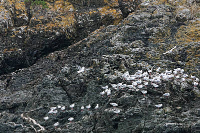 Sea Gulls On Rocky Shore Poster by Linda Phelps