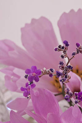 Poster featuring the photograph Sea Lavender Macro  by Sandra Foster