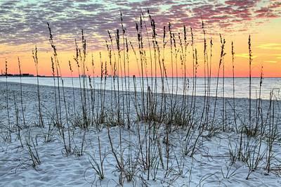 Sea Oat Sunrise Poster by JC Findley