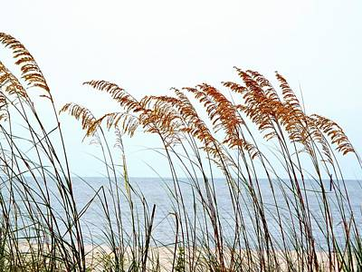 Sea Oats And Serenity Poster by Cindy Croal