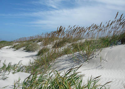 Poster featuring the photograph Sea Oats by Ellen Tully