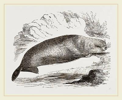 Sea-otter Poster