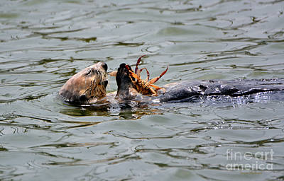 Poster featuring the photograph Sea Otter Munching On Crab Leg by Susan Wiedmann