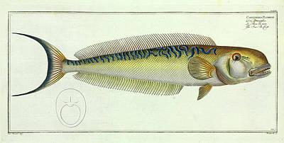 Sea-pea-cock Poster