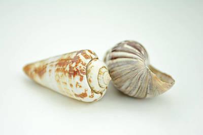 Sea Shell And Shadows Poster