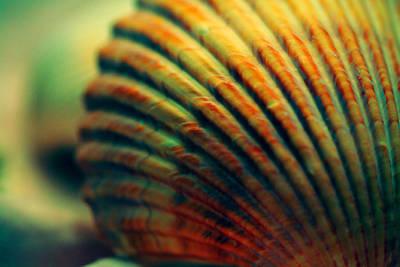 Sea Shell Art 1 Poster