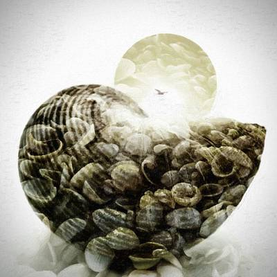 Sea Shell In Oil Paint On Canvas Poster by Tommytechno Sweden