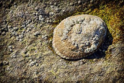 Sea Shell Rock Poster