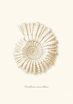 Sea Shell White French Vintage Poster by Patruschka Hetterschij