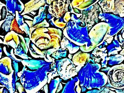 Sea Shells 3406 3a Poster
