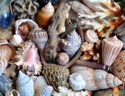 Sea Shells Poster by Elizabeth Abbott