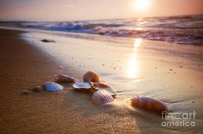 Sea Shells On Sand Poster
