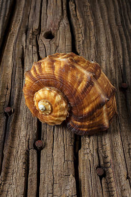 Sea Snail Shell On Old Wood Poster by Garry Gay