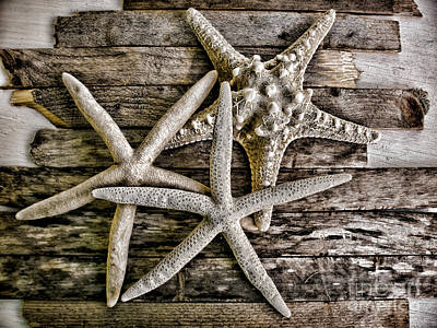 Sea Stars Poster by Colleen Kammerer
