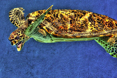 Sea Turtel Poster