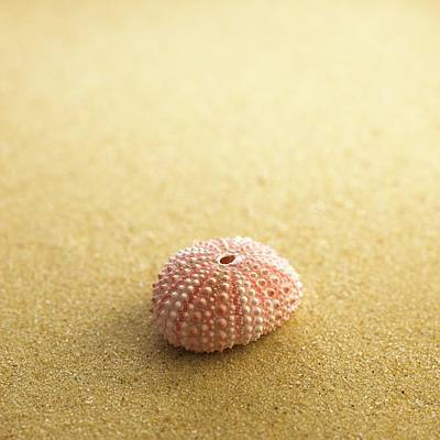 Sea Urchin Shell On Sand Poster