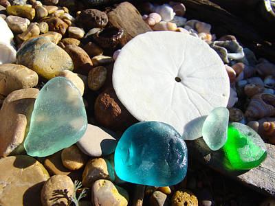 Seaglass Art Prints Rock Garden Sand Dollar Poster