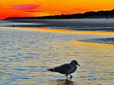 Seagull At Sunset Poster by Cindy Croal