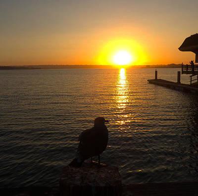 Seagull Enjoys The Sunset Poster by William  Dorsett