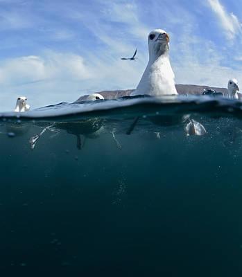 Seagull Poster by Erlendur Gudmundsson