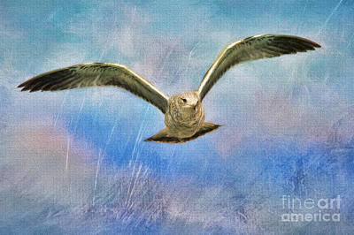 Seagull In The Storm Poster