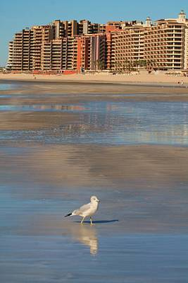 Poster featuring the photograph Seagull Motel by Alicia Knust