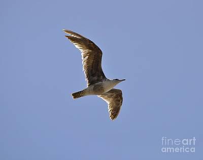 Seagull N Light  Poster