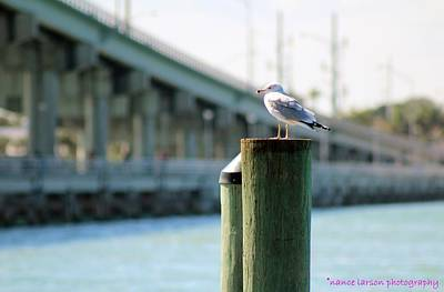 Seagull On The Dock Poster